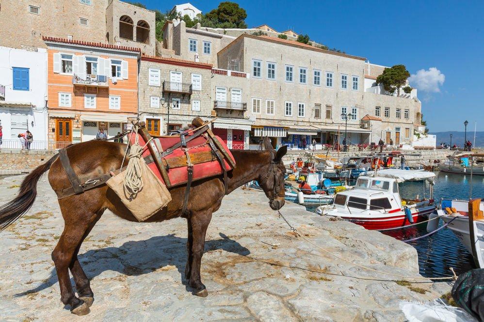 burro en la isla hidra en Grecia